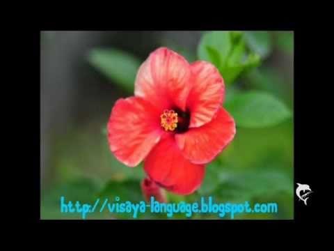 セブアノ語、ビサヤ語による数詞パート2